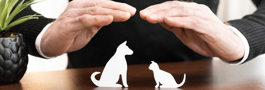Choisir son assurance animaux